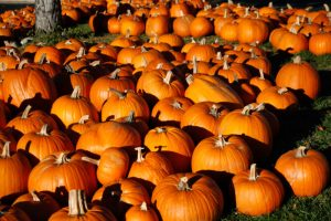 pumpkins-15516006856-700x467